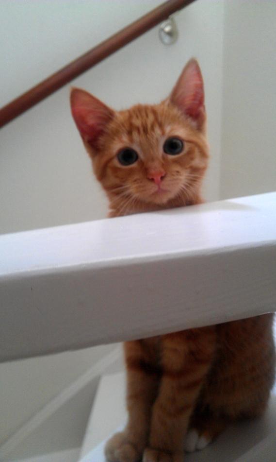missy_kitten